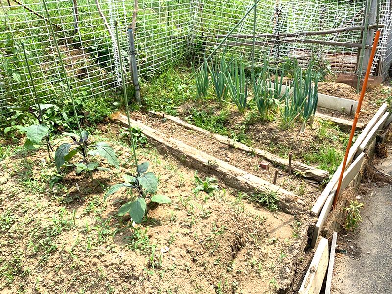 季節に応じ、畑で野菜を栽培します